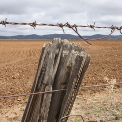 Barbed wire in the outback