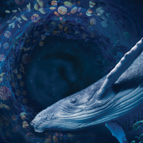Image for 4 Tales to Save the World - a whale in a world underwater