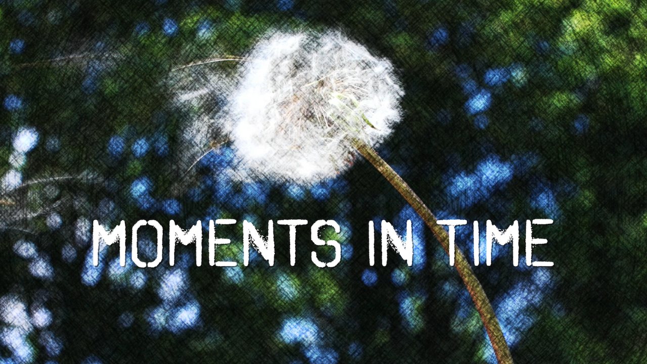 an image of a dandelion for moments in time